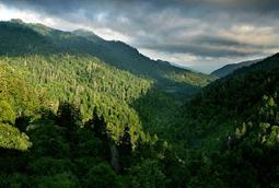 majesticforest.jpg